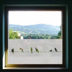 Raamfolie. Overige ramen. Vogels zittend op een draad