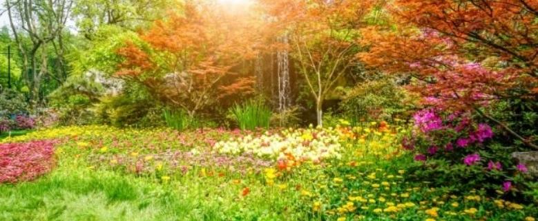 Tuindecoratie Doek zonder Ringen Kleurrijk Bos met Bloemen