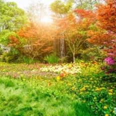 Tuindecoratie Doek met Bevestigingsringen Kleurrijk Bos en Bloemen